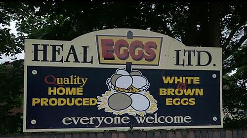 Heal Farms promuove la produzione delle uova in voliera