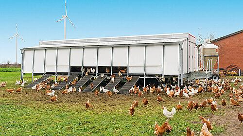 Capannone mobile per la produzione di uova a terra e free range