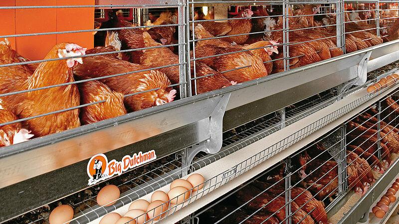 Colony-EU per la produzione di uova