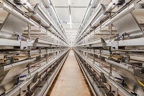 Univent Starter: Gabbia con nastri asporto deiezioni per lo svezzamento delle pollastre
