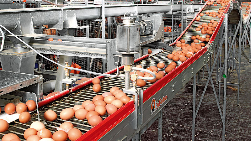 Raccolta uova