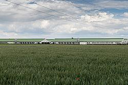 Foto da lontano di nuovi capannoni per la gestione dei riproduttori