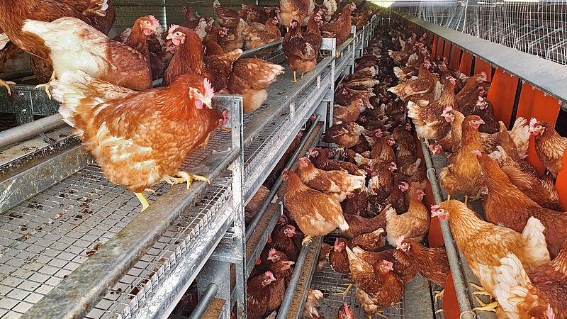 NATURA Nova per la produzione di uova free range e a terra