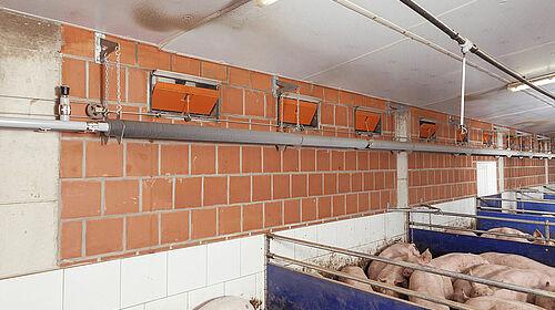 Ingrasso suini con finestrelle a parete, tubi di rinfrescamento e riscaldatori
