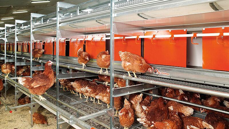 Moderna produzione di uova free range e a terra con NATURA Colony