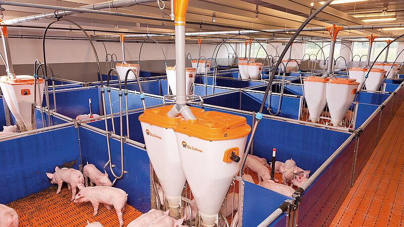 Svezzamento di successo dei maialini da latte