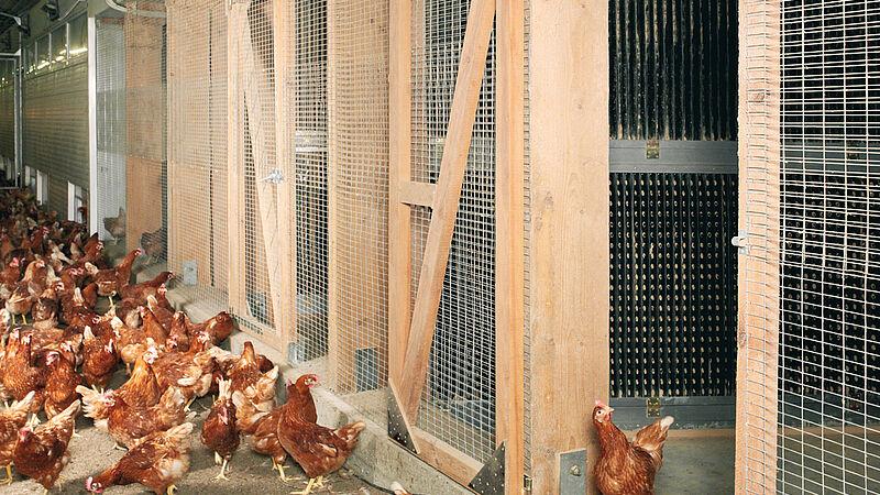 Trattamento dell' aria esausta per gli allevamenti avicoli con il filtro antipolvere StuffNix