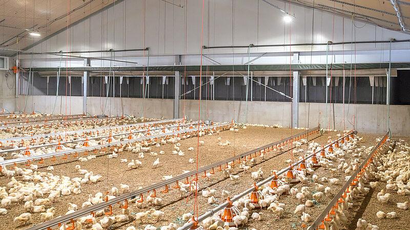 Trattamento dell'aria esausta per gli allevamenti avicoli con il filtro Pollo-M