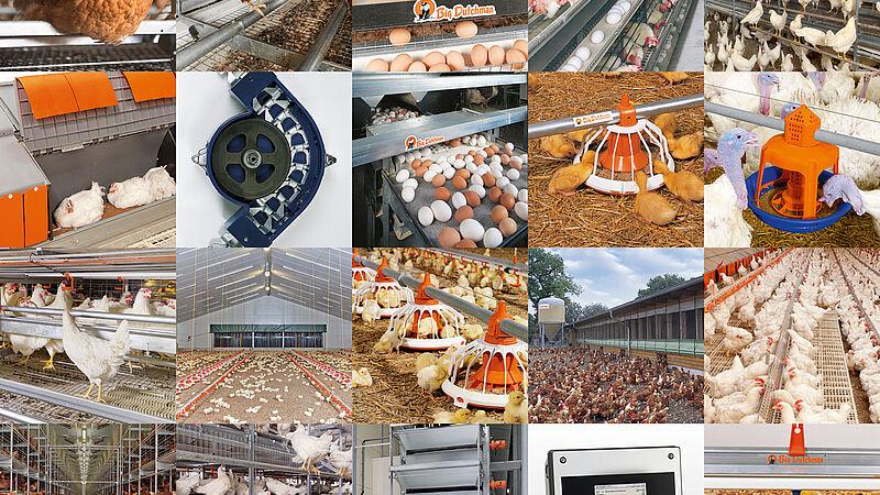 Moderna produzione avicola
