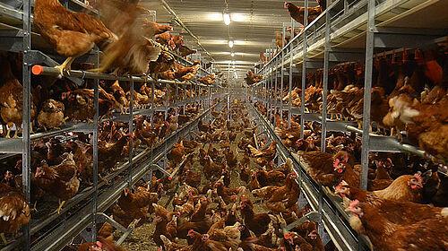 Animali a terra e sui livelli del sistema