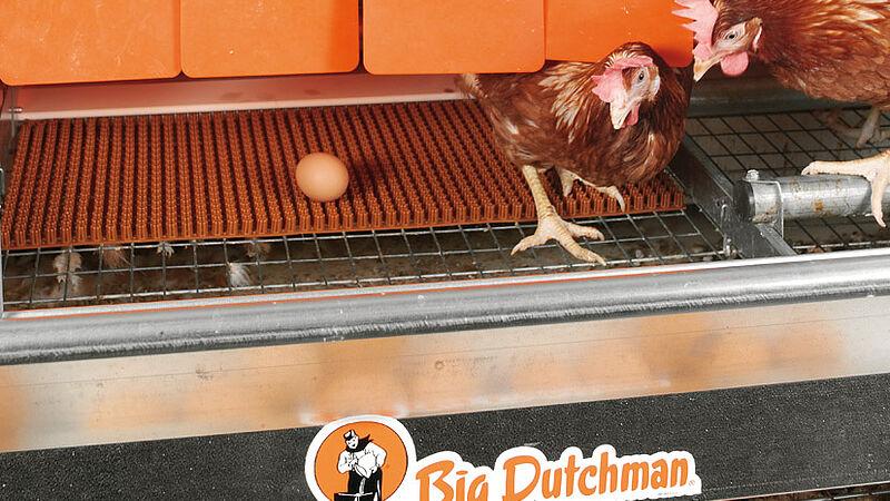 Produzione di uova con Colony-EU