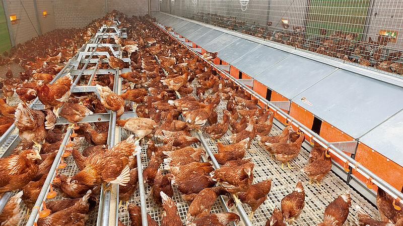 Produzione di uova a terra
