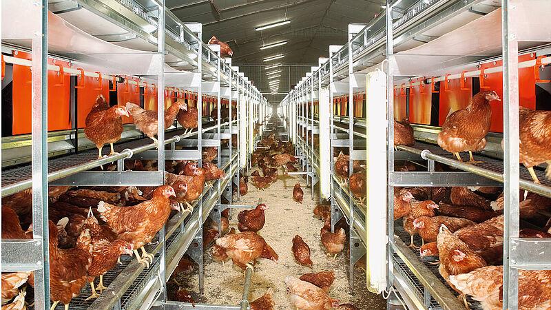 NATURA Colony per produzione di uova free range e a terra