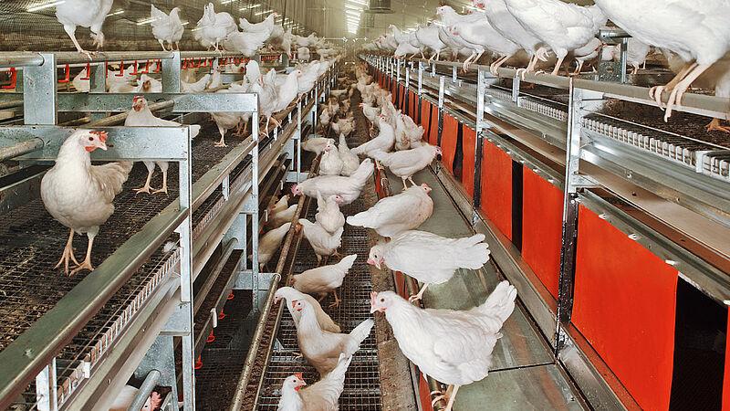 Voliere NATURA Nova Twin per la produzione di uova free range e a terra