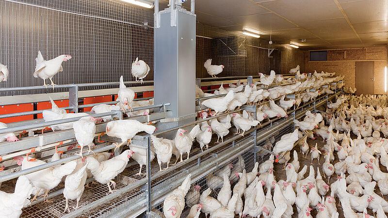 Produzione di uova con NATURA Floor